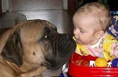 Домашние животные и здоровье детей