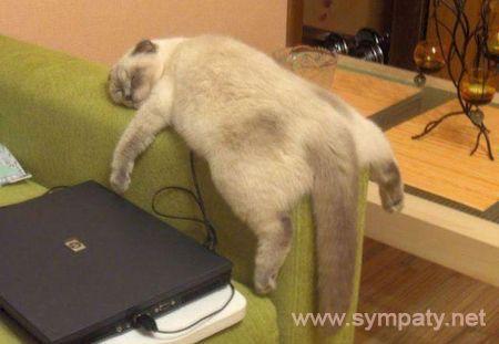 пособие по лентяйству