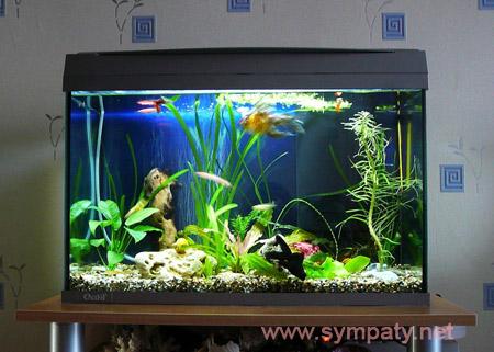 аквариум с нуля