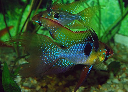 Стили и дизайн аквариумных интерьеров