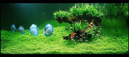 авторский интерьер аквариума Амано