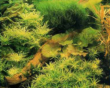 голландский интерьер аквариума
