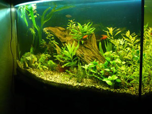ландшафтный интерьер аквариума