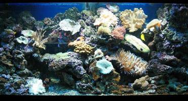 морской интерьер аквариума