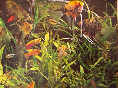 смешанный интерьер аквариума