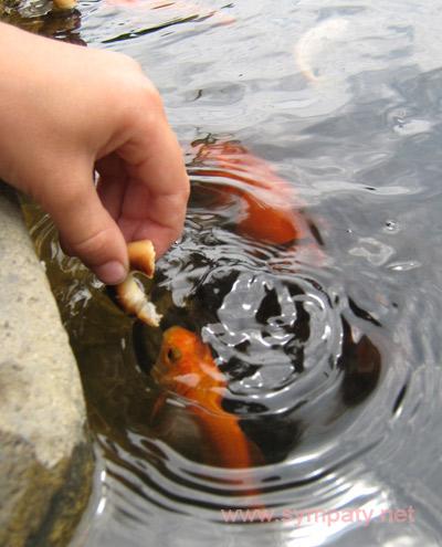 Как ухаживать за аквариумом кормление рыбок