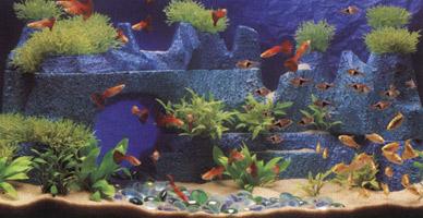 видовой интерьер аквариума
