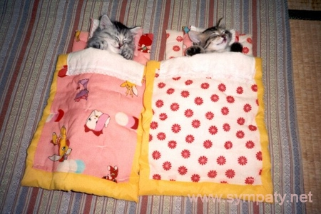 Правила ухода за котенком - VashiPitomcy ru