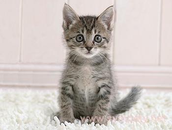 Уход за котенком Правила кормления и ухода - СКиФФ