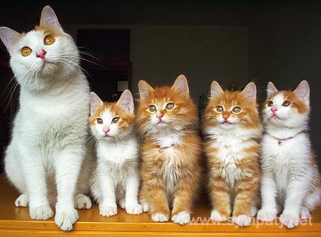 выбрать котенка