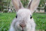 как выбрать кролика