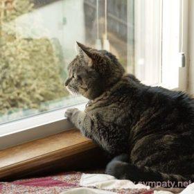 правильно утеплить окна