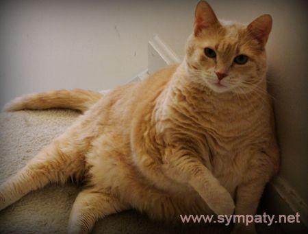 как похудеть коту