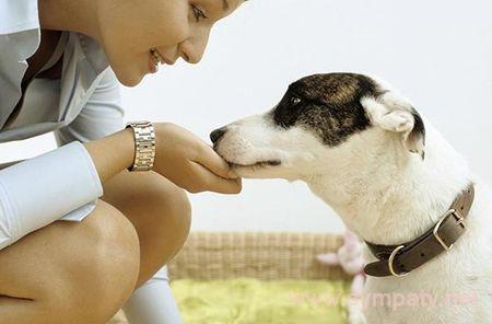 как взять собаку из приюта