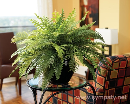 какие растения вредные для дома фото
