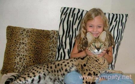 экзотические породы кошек