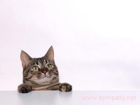 аллергия на шерсть кошек
