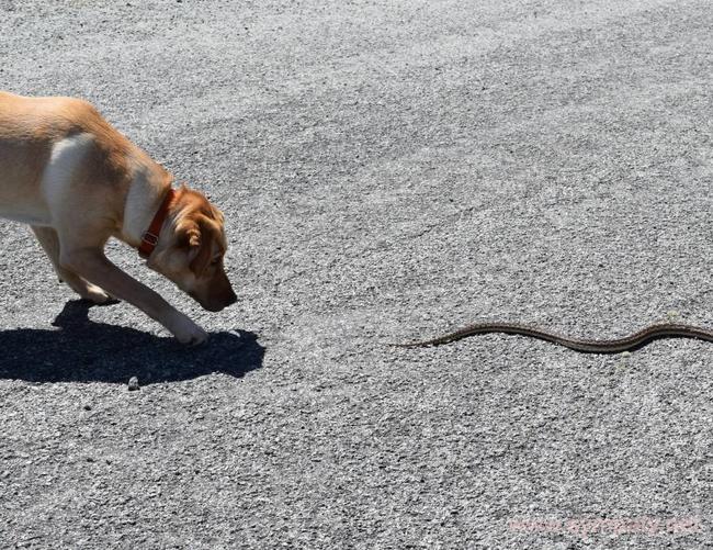 Что делать при укусе змеи в первую очередь