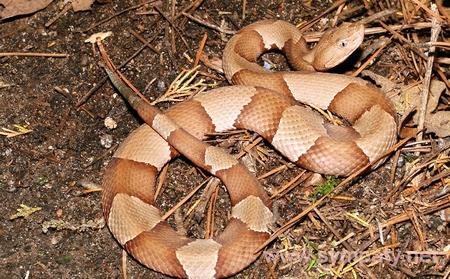 укусила змея что делать