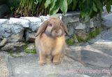 завести декоративного кролика в домашних условиях