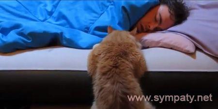 кошка не дает ночью спать
