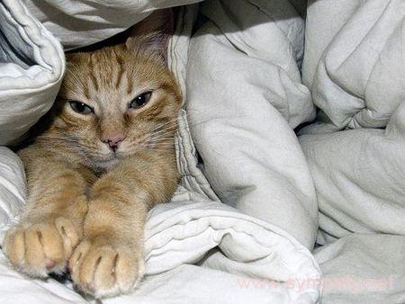Только кот тихо спал