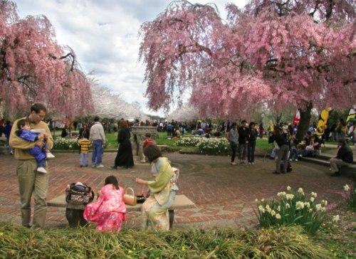 Апрель - время цветения сакуры в Японии