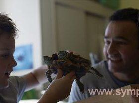как правильно ухаживать за черепахой