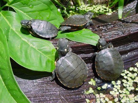 как правильно ухаживать за сухопутными черепахами
