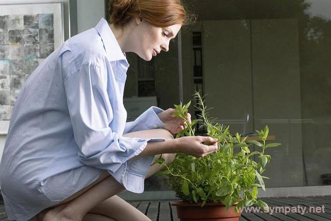 комнатные растения по фен-шуй