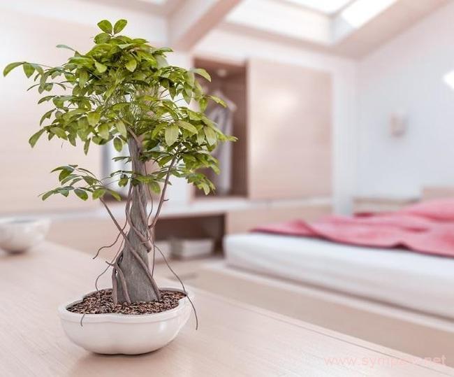 растения по фен-шуй