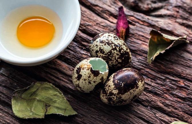Перепелиные яйца: польза и вред для мужчин и женщин
